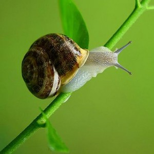 "Snail Secretion Can Also be Used to ""Prevent, Treat and Cure Rosacea"""