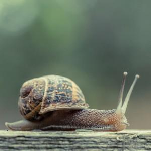 Σαλιγκάρι: Εντυπωσιακά Αποτελέσματα