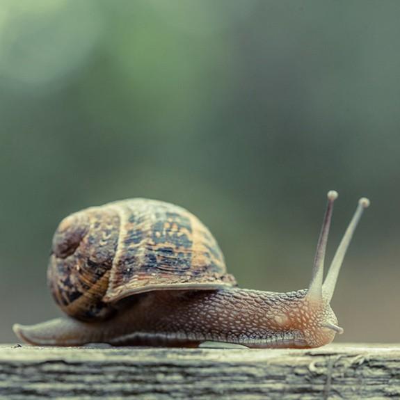 Snail: Impressively Resultful